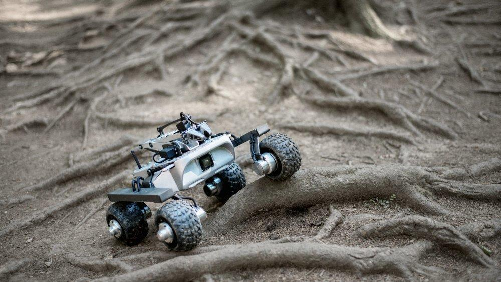 rover-on-a-branch-2.jpg